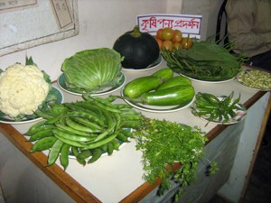 Plant display of Agriculture Project