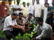 Trainer showed planting system of seedlings in the field