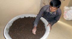 Demo plot of Vermi Compost Fertilizer.