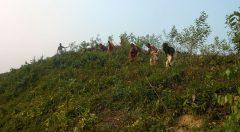 Weeding at Deboltoli Dalarmukh, FDG. Pohorchanda Forest Beat