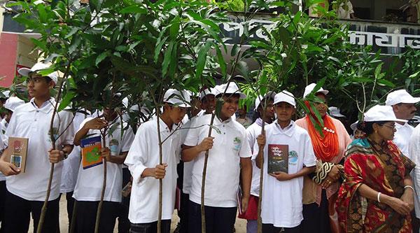 Seedlings distribution at Rangunia