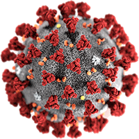 Virus photo